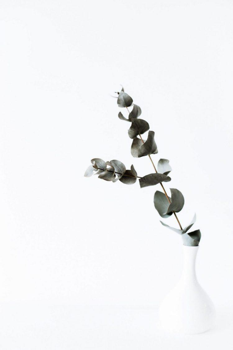 Eucalyptustak